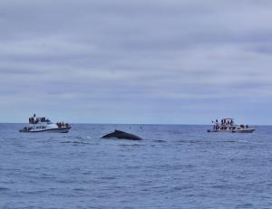 Inicia la época de las ballenas
