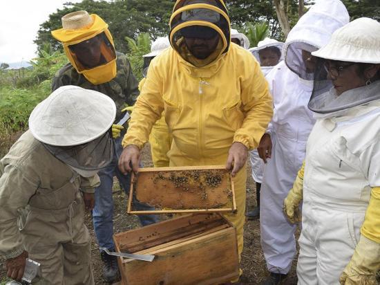 Buscan aumentar la producción de miel de abeja