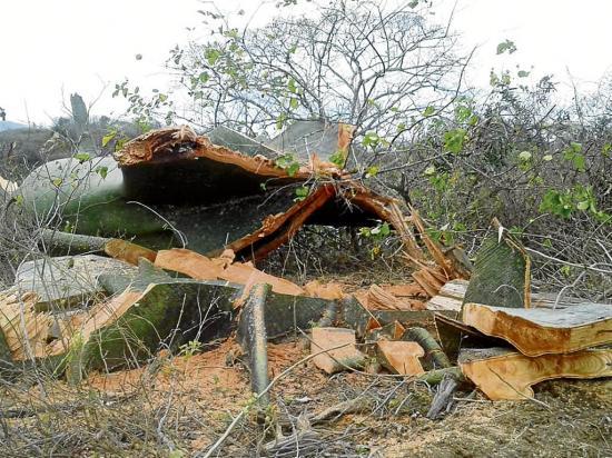 Talan árboles en zona protegida