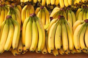 Ecuador, primer exportador mundial de banano, se blinda contra plaga Fusarium