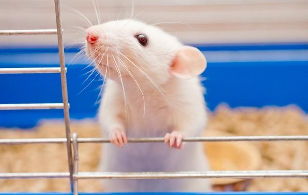 Demuestran en ratones que componente de la uva ayudará a sobrevivir en Marte
