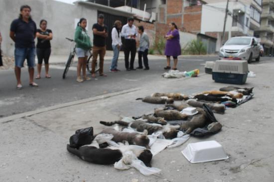 Al menos 16 gatos y un perro fueron envenenados en un barrio de Manta