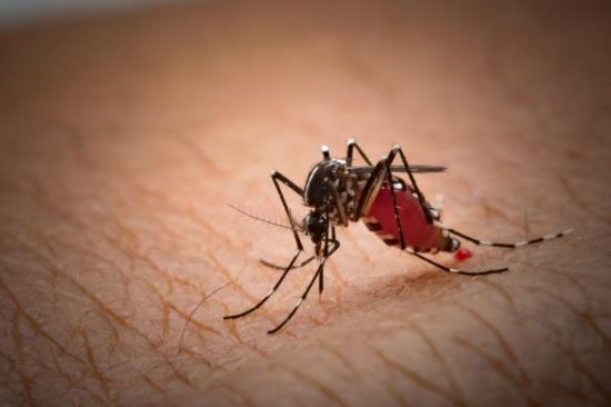 Nicaragua registra 10 muertes por dengue y 67.381 casos sospechosos