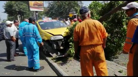 Un taxista pierde pista y se estrella contra un árbol en Portoviejo
