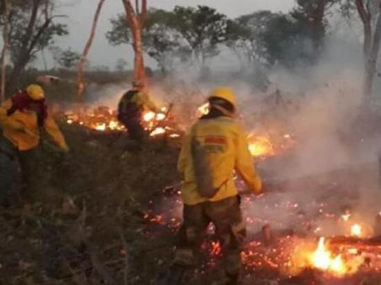 Incendio consume más de 460 mil héctareas