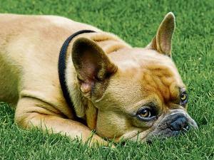 Perro muere poco después que su dueño