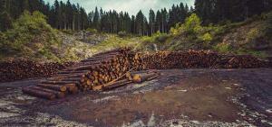 Ecuador: El país amazónico más deforestado pero foco de otras amenazas