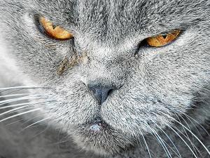 Venden una gata que aleja a las vecinas y cura el chuchaqui