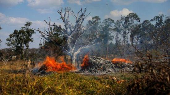 El incendio de la Amazonía, uno de los más devastadores junto al de 1998