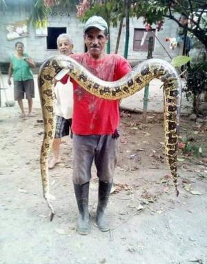Temor por hallazgo de serpientes