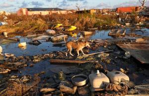Unos 220 perros y 50 gatos murieron en un albergue en Bahamas por huracán Dorian