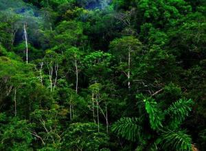 Ambientalistas en Ecuador exigen al Gobierno declarar ''emergencia climática''