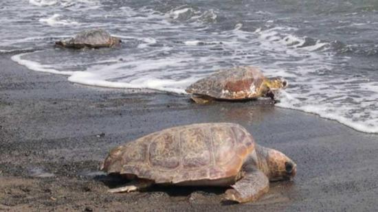 Arrestan a dos hombres vinculados a gran incautación de tortugas en EEUU
