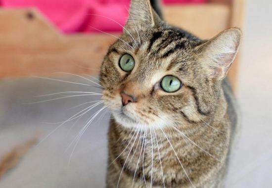 Al contrario de lo que se piensa, los gatos sí pueden llegar a ser nuestros amigos