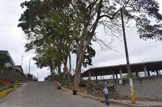 EL CARMEN: Denunciarán muerte de guayacanes en la ULEAM