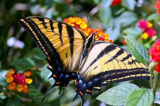 Consejo Europeo destina 1,5 millones de dólares para la investigación de mariposas en Ecuador
