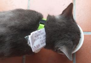 'Pixi' o 'Huarache; el gato que vivía en dos casas distintas a la vez
