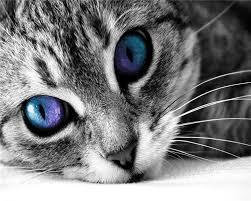 Crean herramienta para ''ver'' con los ojos de los animales