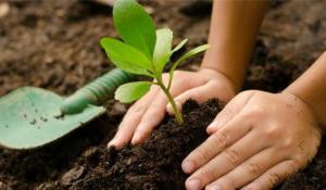 Municipio de Quito planea sembrar un millón de árboles hasta 2023