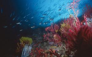 La crisis climática podría desplazar a especies marinas a zonas más profundas