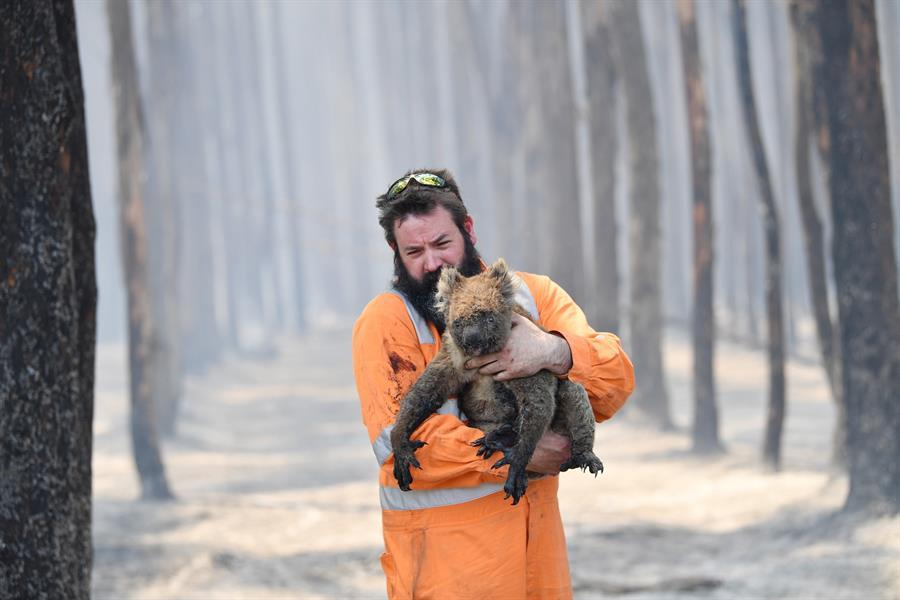 Rescate de animales en los bosques quemados de Australia