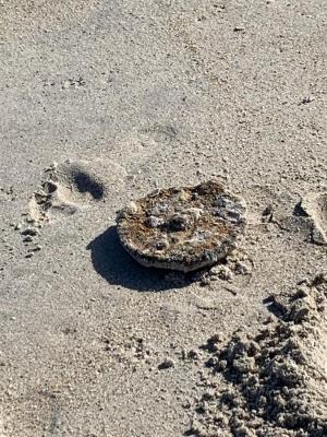 Un hombre encuentra una mina de la II Guerra Mundial en una playa de Florida