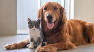 Ministerio de Salud lanzará campaña de vacunación para mascotas en Portoviejo