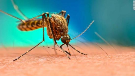 Manabí: Adolescente de 14 años es la primera víctima mortal del dengue 2020
