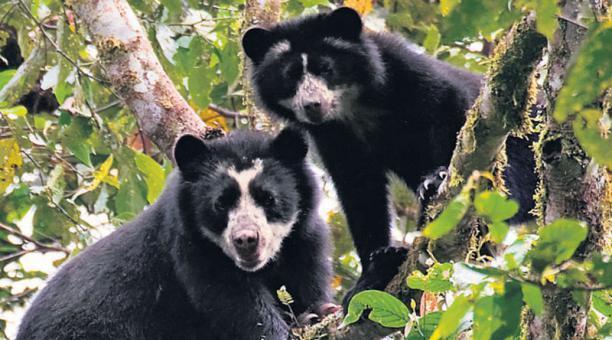 Un tercio de especies de animales y plantas, extinguibles en 50 años