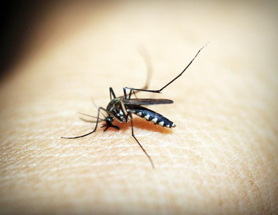 Muertes por dengue se disparan hasta 16 en Paraguay tras 10 nuevas víctimas