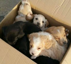 En Manta se prohíbe la venta de animales en calles, mercados y locales no autorizados