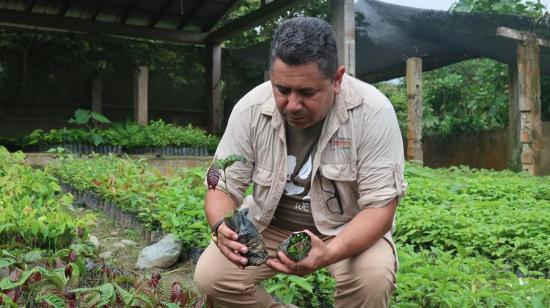 Apadrinar un árbol y capturar carbono en Ecuador, a un clic de distancia