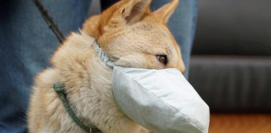 Primer caso de contagio por coronavirus en un perro
