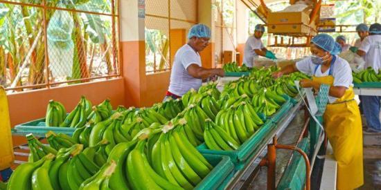El mercado ecuatoriano pierde 200 millones de dólares diarios por COVID-19