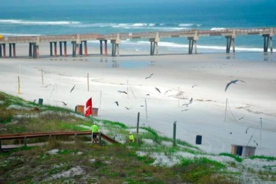 Florida, con cifras ascendentes de covid-19, reabre playas sin tomar el sol