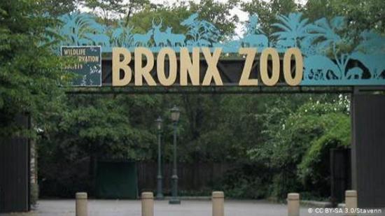 El coronavirus afecta ya a ocho grandes felinos del zoo de Nueva York