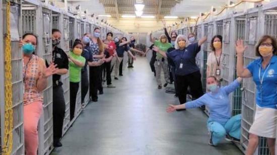 Covid-19 vacía las jaulas de perros y gatos para adopción en Miami