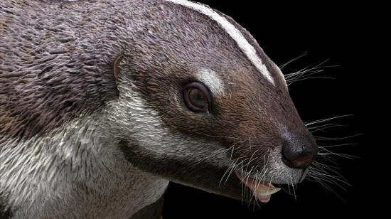 """""""Bestia loca"""", el fósil de un extraño mamífero de 66 millones de años"""