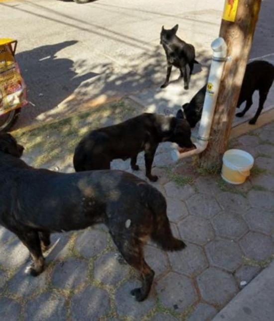 En Portoviejo instalarán 50 dispensadores de alimentos para los animales