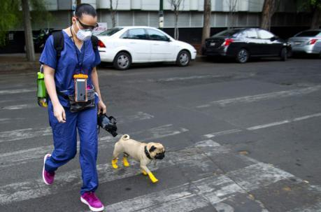Harley, el perro terapeuta que alivia el estrés de médicos en México