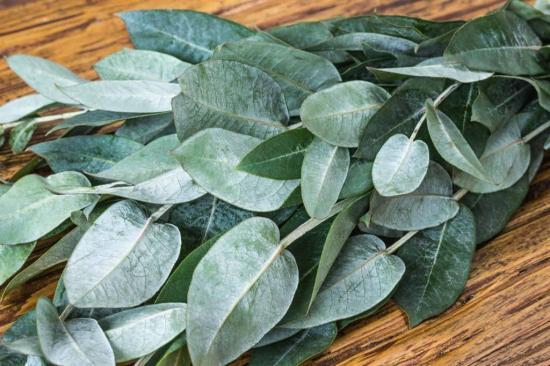 La Policía detiene a vendedores que ofrecían hojas de eucalipto para combatir el Covid-19