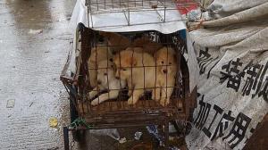 China prohíbe criar perros para su consumo humano al no considerarlos ganado