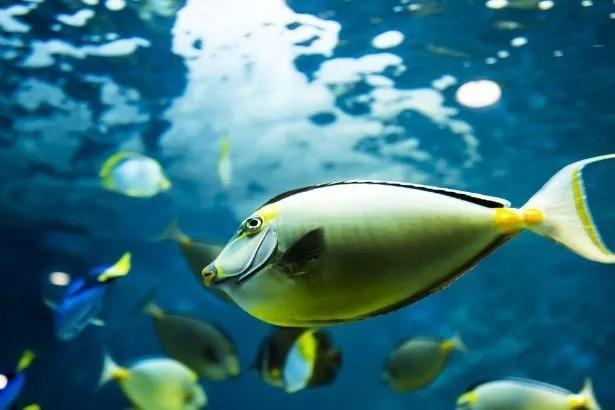 El apareamiento de muchos peces, en peligro por la temperatura del agua