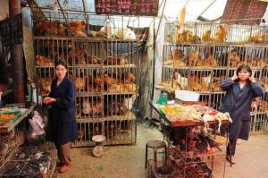 China cerrará gradualmente todos los mercados donde se venden aves vivas