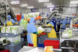Ecuador garantizará a China toda información y revisión necesaria del camarón