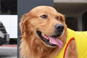 Barcelona SC pide ayuda para hallar a su mascota Coloso