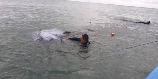 Rescatan a ballena jorobada en las costas de Esmeraldas
