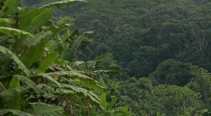 Árboles en la Amazonía de Ecuador serán identificados con inteligencia artificial