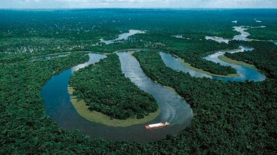 Expertos detectan 'erosión en la biodiversidad' de la selva amazónica