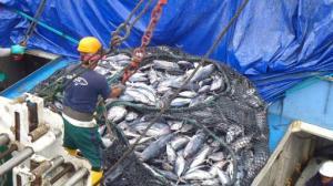 WWF lanza en Ecuador proyecto de pesca sostenible, digital y responsable